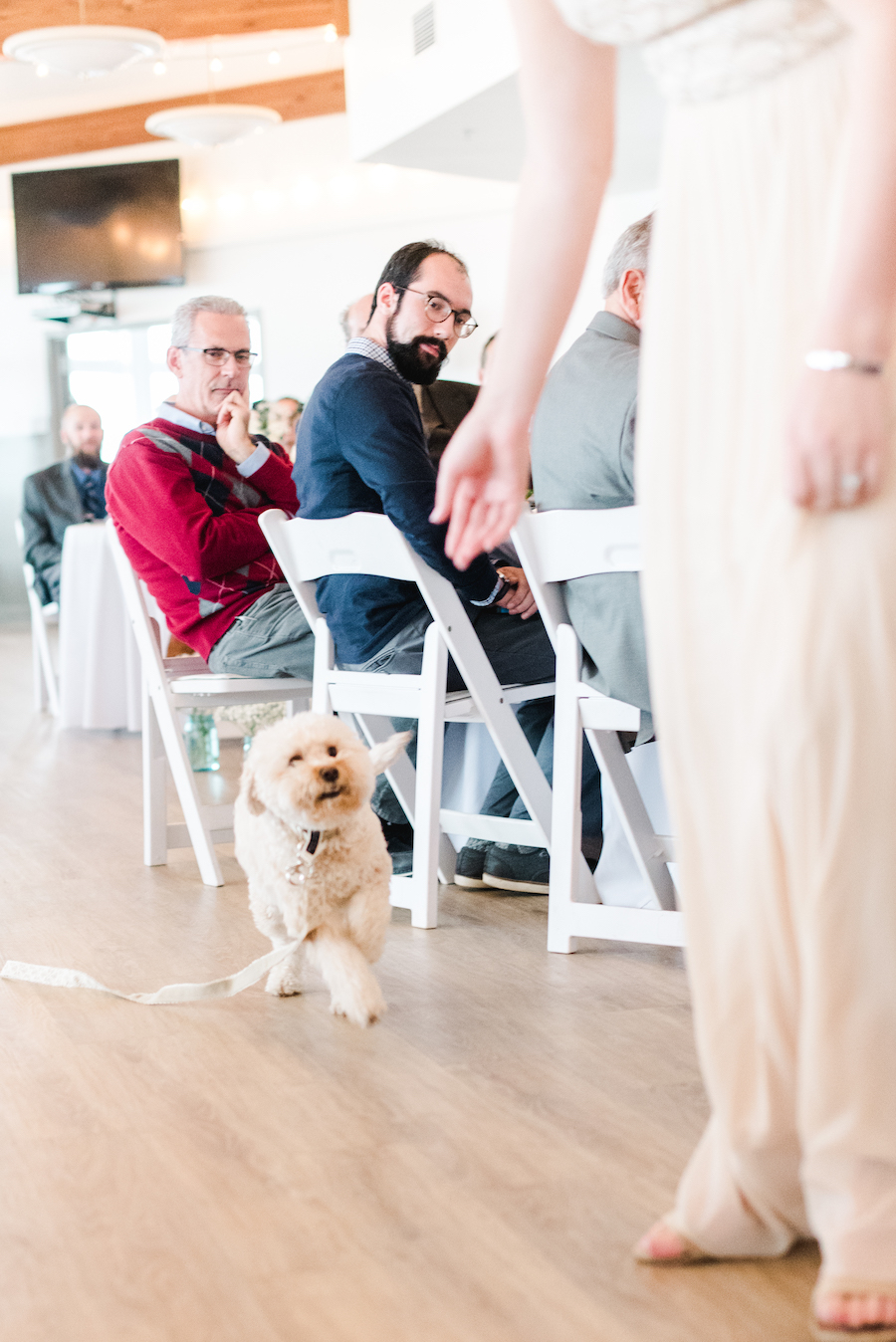 Dog ring bearer running down the aisle