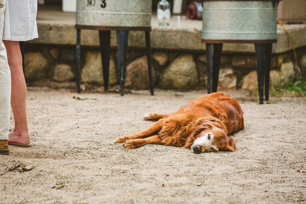 Dog takes a nap while guests dance at a wedding reception