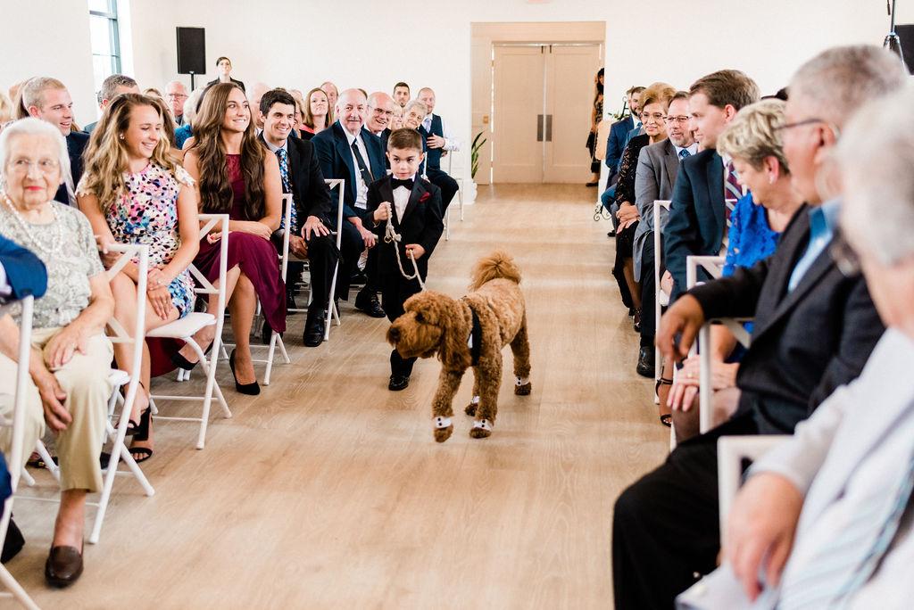 A dog and ring bearer walking down the aisle during a Kalamazoo, Michigan wedding