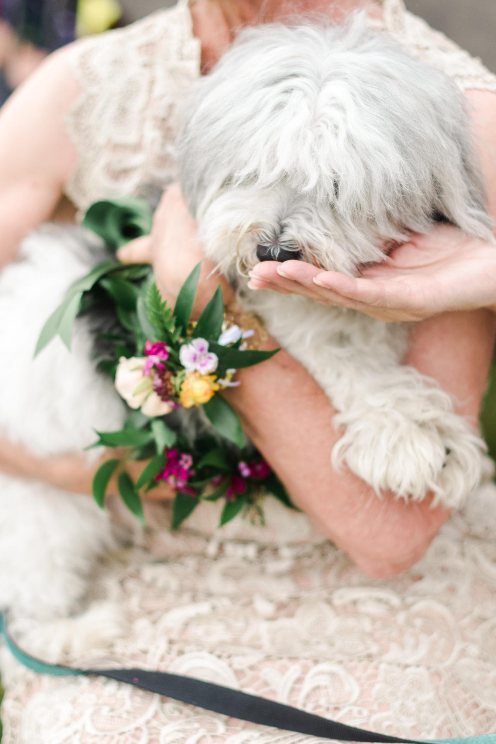 A flower bearer dog